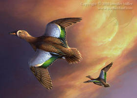 Blue-Winged Teal by Nambroth