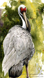 White-Naped Crane by Nambroth