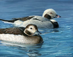 Long-Tailed Ducks by Nambroth