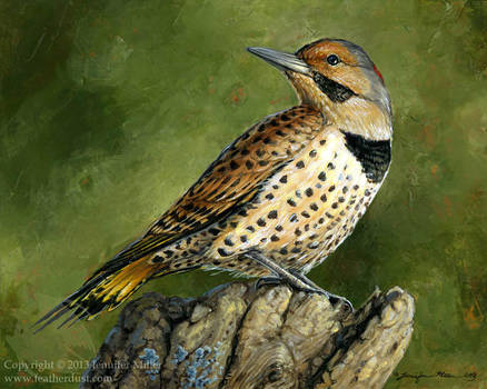 Romantic Northern Flicker by Nambroth