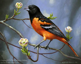 Oriole in Dogwood by Nambroth