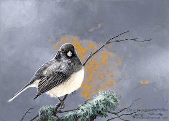 Junco Whispers by Nambroth