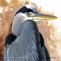 Great Blue Heron Portrait by Nambroth