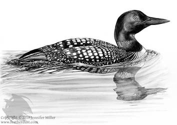 Common Loon, Companion Species 2016/17 FDS by Nambroth