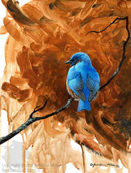 Bluebird Study by Nambroth