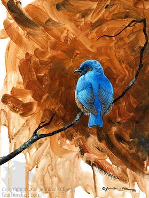 Bluebird Study by Nambroth
