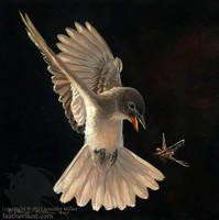 Alder Flycatcher by Nambroth