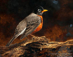 Understory Robin by Nambroth