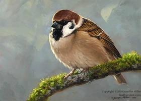 Eurasian Tree Sparrow by Nambroth