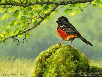Spotted Towhee by Nambroth