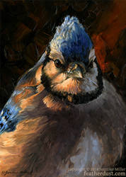 Evening Light Blue Jay by Nambroth