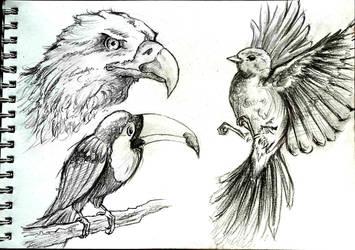 Pencil time: Birds by shadowhatesomochao