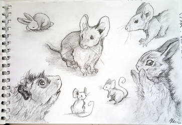 animal sketches by shadowhatesomochao
