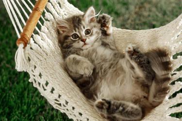 adorable cat by kissofdead06