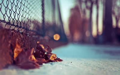 las ultimas hojas by kissofdead06