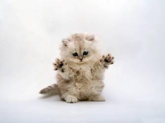 Cute kitten by kissofdead06