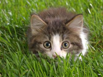 sweet kitten by kissofdead06