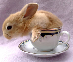 I have a bunny in my tea by kissofdead06