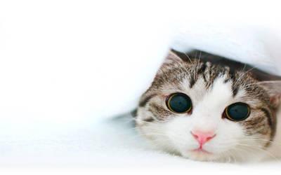 kitten playing by kissofdead06