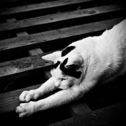 Stretching by ArtOfFragility
