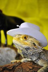 Cowboy Dragon I by karatechick13