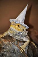 Wizard Lizard I by karatechick13