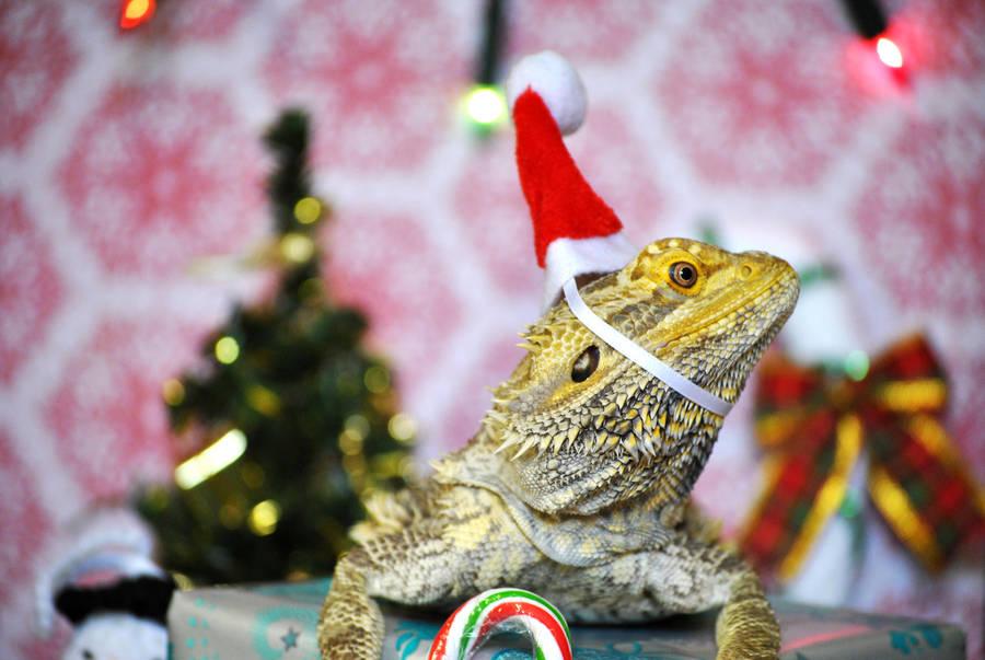 Christmas Lizard by karatechick13
