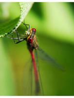 dragonfly II by rdd