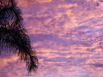 Palms by PhotElle