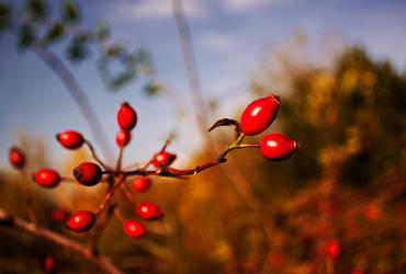 Red beauty by velky-jojko