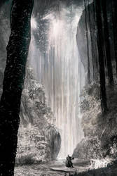 Into the White Forest by ignacio197