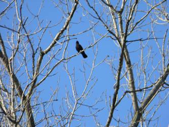BIRD!!!! by MewEmily15