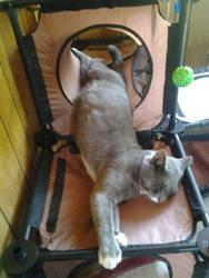 Lazy Cat by KairiaShade