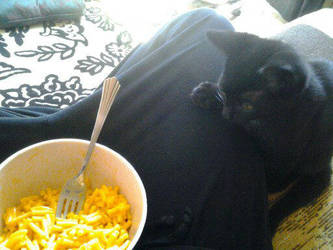 Give me your food, human. by KairiaShade