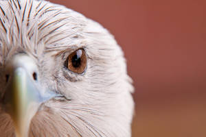 Hawk Eye by LifeCapturedPhoto