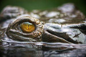 Eye by LifeCapturedPhoto