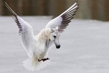 Pegasus by mceric