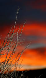 Sunset Thorns_0179 by ktelge
