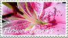 flower-lovers stamp by glykeria