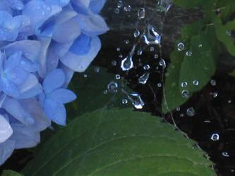 Dew drops by Sweet-innocent-bliss