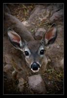 Deer. by feudal89