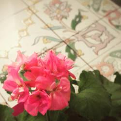 Primroses and tiles by charmingyuri