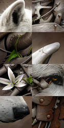 Wild 1 - Close-up by BenF