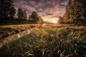 Glowing life by Trichardsen