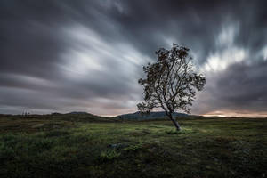 The dancing tree by Trichardsen