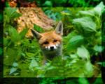 fox by miezbiez