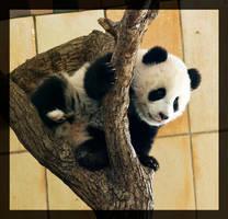 panda baby by miezbiez