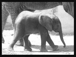 little elephant in bw by miezbiez