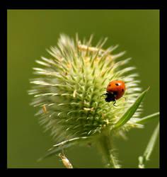 ladybug by miezbiez