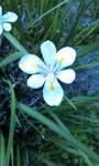 White  Flower by monica52404